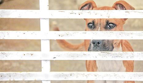 perro, perros, animales, mascotas, sacrifican perros, querétaro